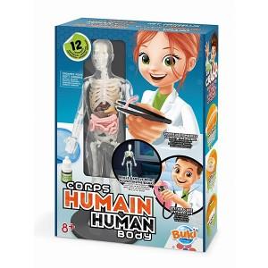Ciało ludzkie - Model